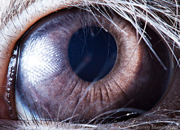2. 鸭子; 3.猫头鹰; 17种动物的眼睛
