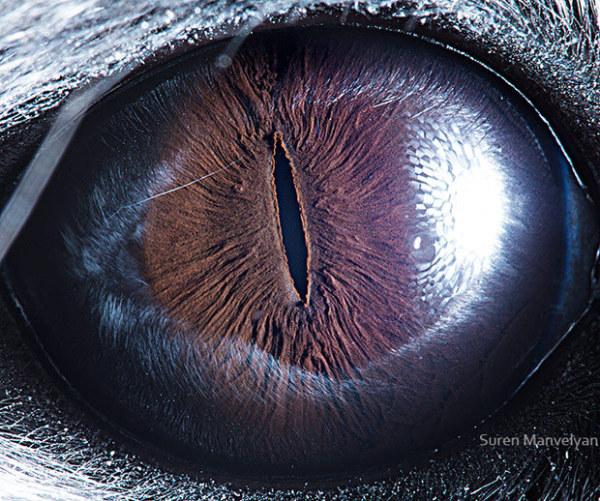 你认得出是哪个动物的眼睛吗?(5)