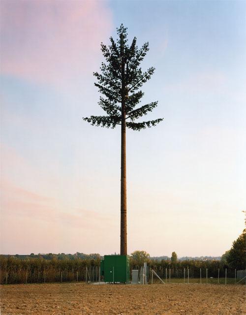 伪装成树的手机信号塔(12)