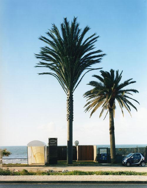 伪装成树的手机信号塔(15)
