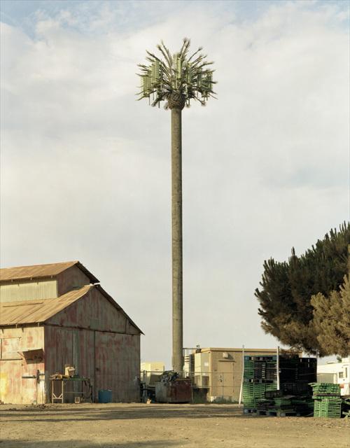 伪装成树的手机信号塔(17)