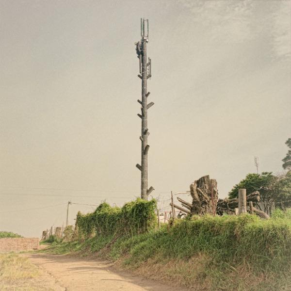 伪装成树的手机信号塔(3)